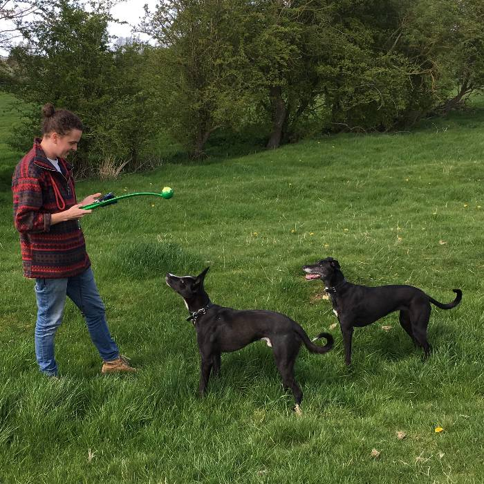 Pet and house sitting job in Yelvertoft, England - House Sitters UK